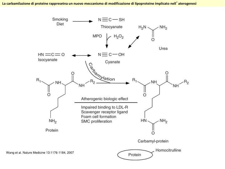 La carbamilazione di proteine rappresetna un nuovo meccanismo di modificazione di lipoproteine implicato nell