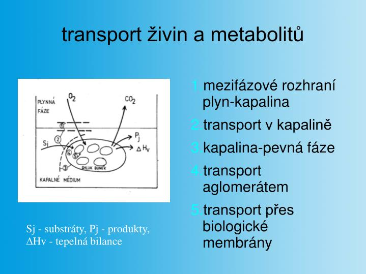 transport živin a metabolitů