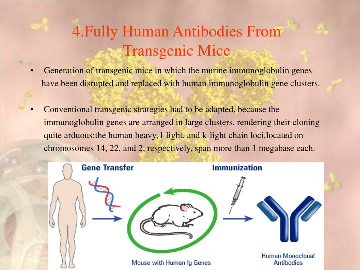 4.Fully Human Antibodies From