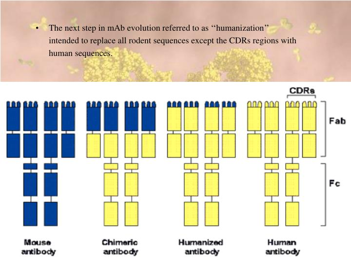 The next step in mAb evolution referred to as ''humanization''