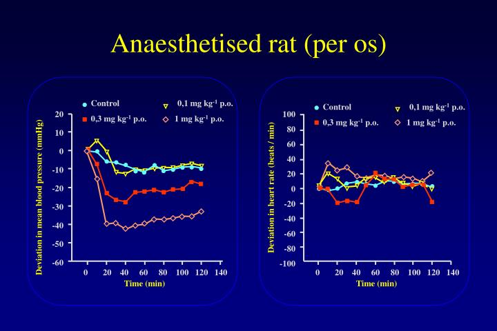 Anaesthetised rat (per os)
