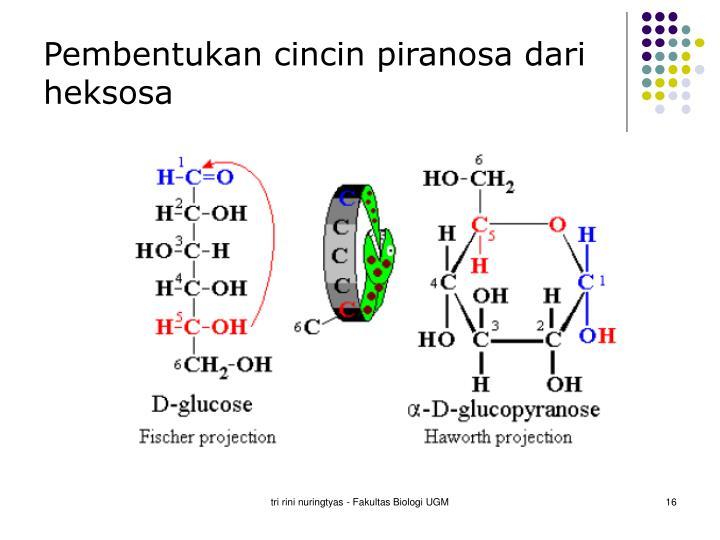 Pembentukan cincin piranosa dari heksosa