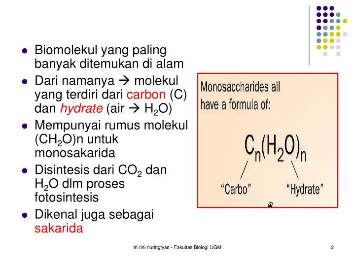 Biomolekul yang paling banyak ditemukan di alam