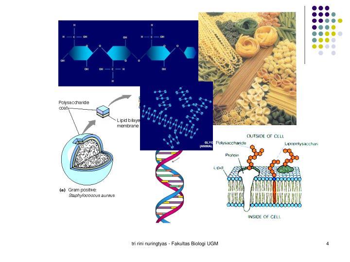 tri rini nuringtyas - Fakultas Biologi UGM