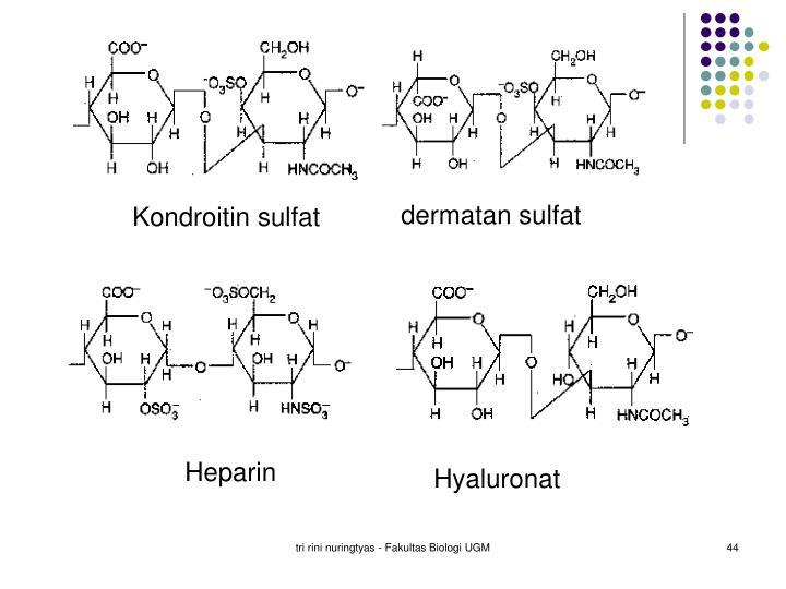 dermatan sulfat