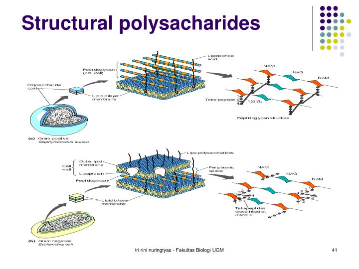 Structural polysacharides
