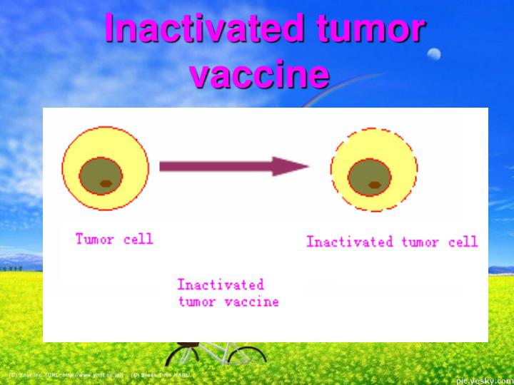 Inactivated tumor vaccine