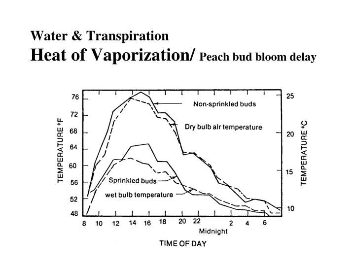 Water & Transpiration