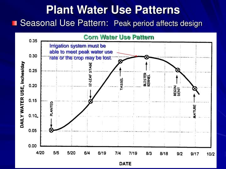 Plant Water Use Patterns