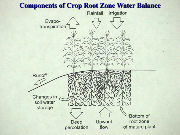 Components of Crop Root Zone Water Balance