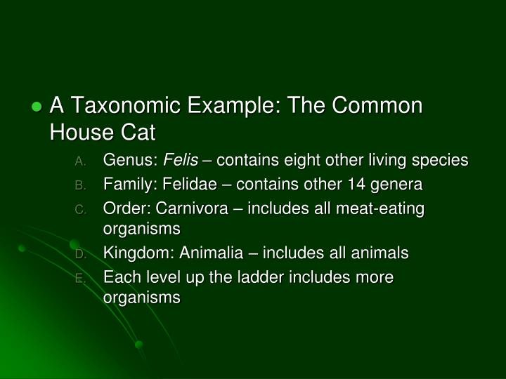 A Taxonomic Example: The Common House Cat
