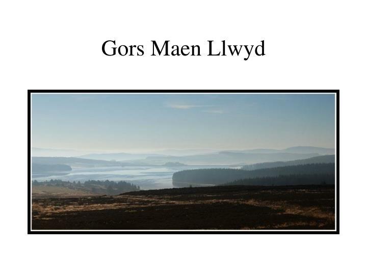 Gors Maen Llwyd