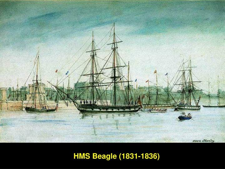 HMS Beagle (1831-1836)