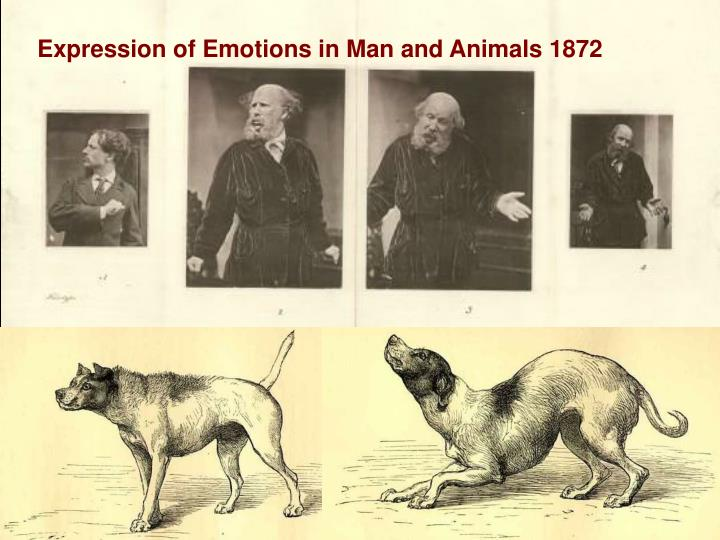 Expression of Emotions in Man and Animals 1872