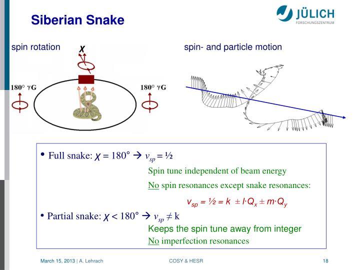 Siberian Snake