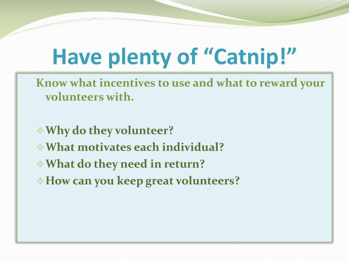 "Have plenty of ""Catnip!"""