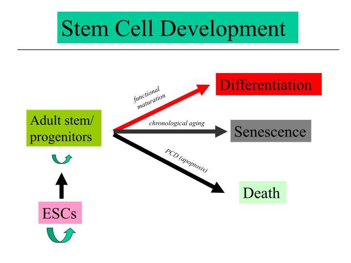 Stem Cell Development
