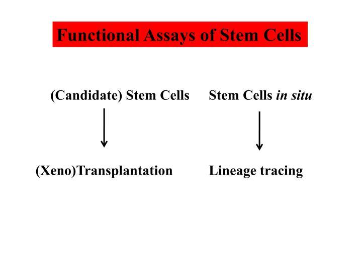 Functional Assays of Stem Cells