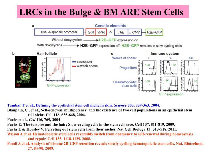 LRCs in the Bulge & BM ARE Stem Cells