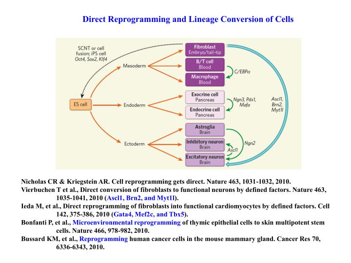 Direct Reprogramming and Lineage Conversion of Cells