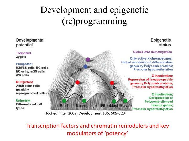 Development and epigenetic (re)programming