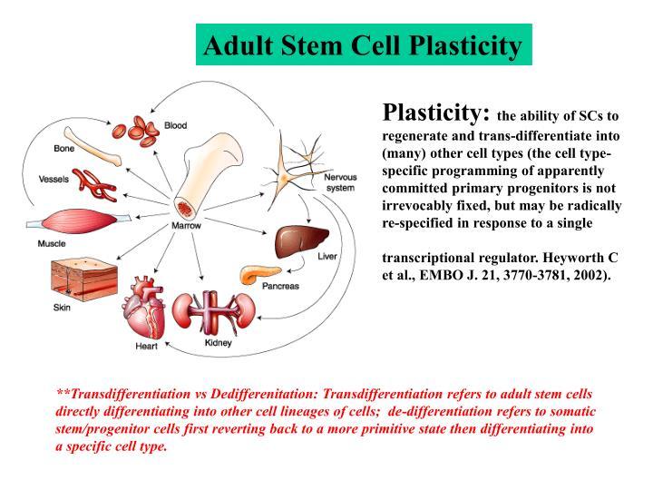 Adult Stem Cell Plasticity