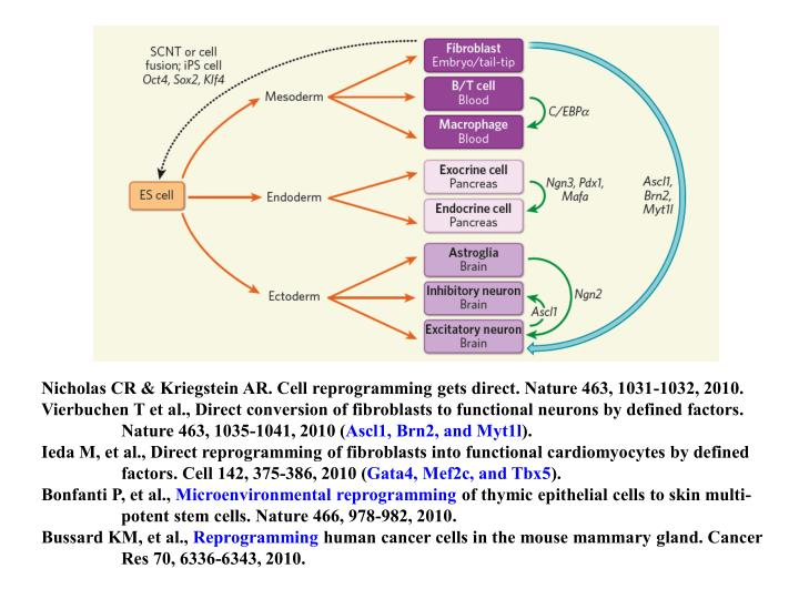 Nicholas CR & Kriegstein AR. Cell reprogramming gets direct. Nature 463, 1031-1032, 2010.