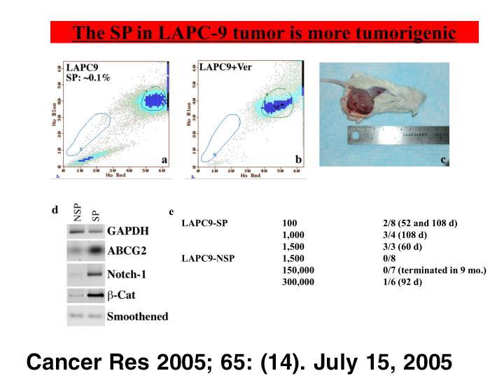The SP in LAPC-9 tumor is more tumorigenic