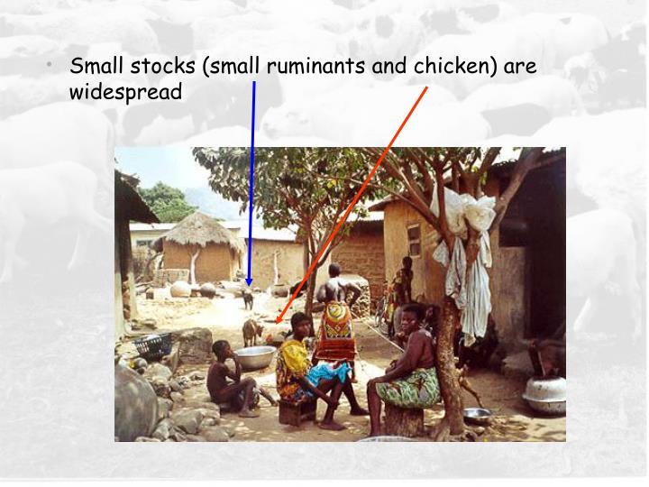 Small stocks (small ruminants and chicken) are widespread