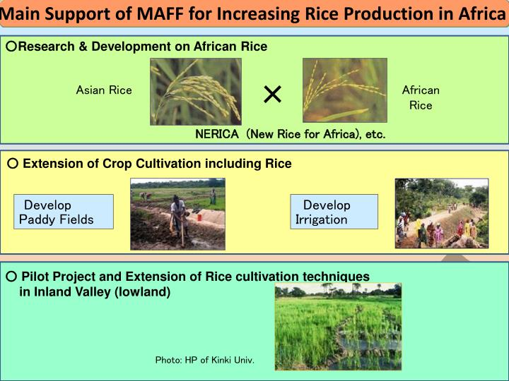 Main Support of MAFF for Increasing Rice Production in Africa