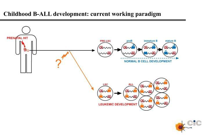 Childhood B-ALL development: current working paradigm