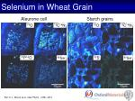 selenium in wheat grain1