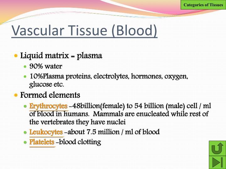 Vascular Tissue (Blood)