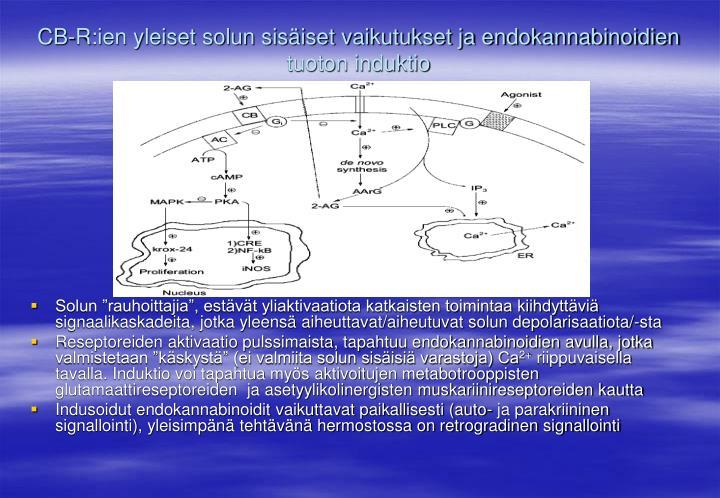 CB-R:ien yleiset solun sisäiset vaikutukset ja endokannabinoidien tuoton induktio
