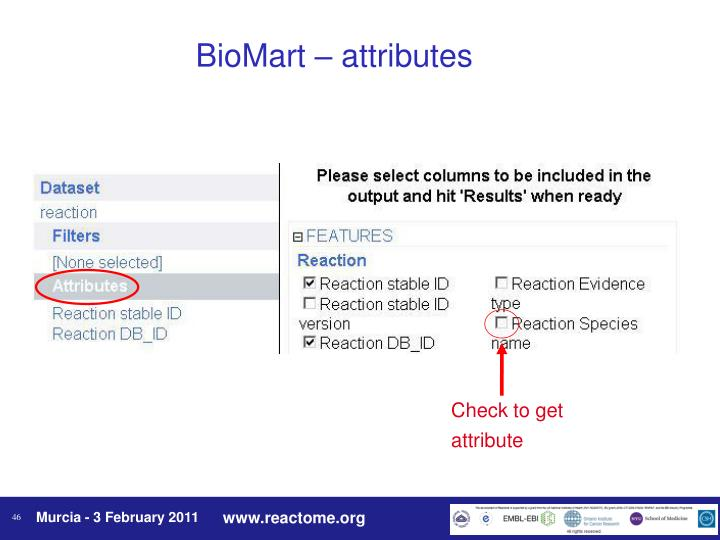 BioMart – attributes