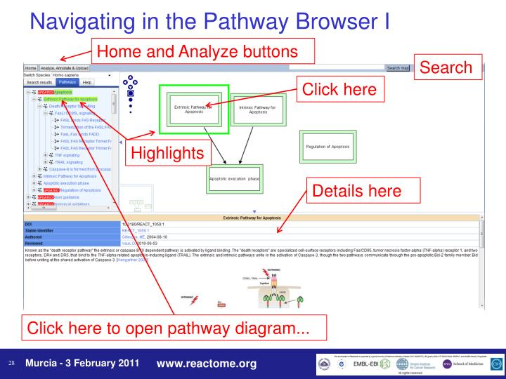 Navigating in the Pathway Browser I