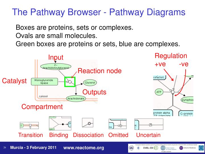 The Pathway Browser - Pathway Diagrams