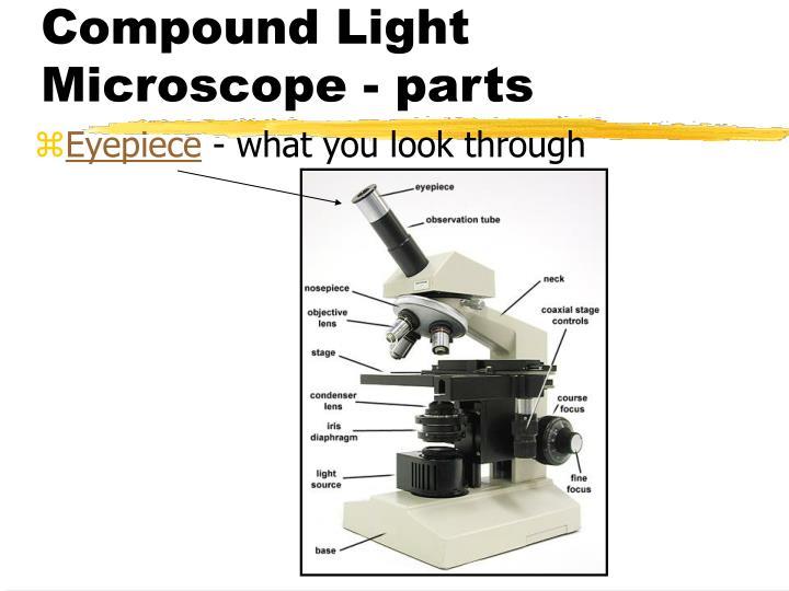 Compound Light Microscope - parts