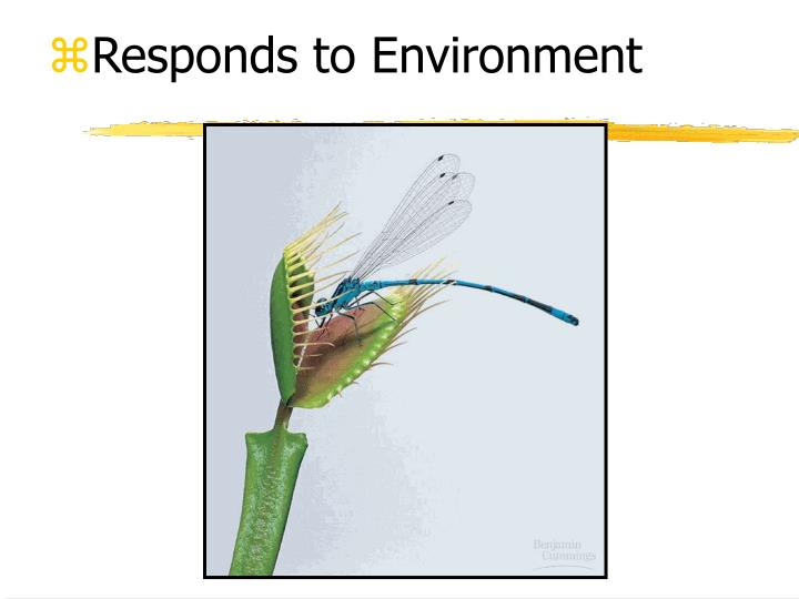 Responds to Environment