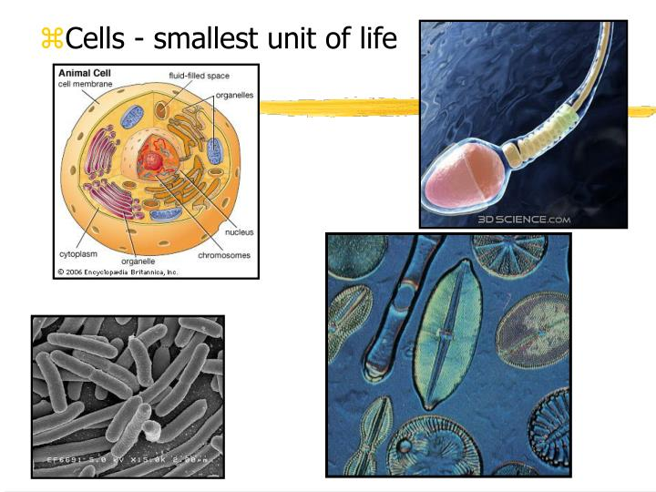 Cells - smallest unit of life