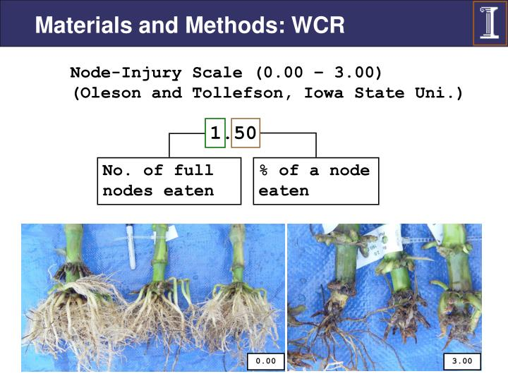 Materials and Methods: WCR