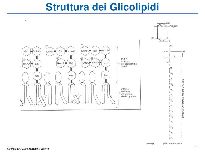 Struttura dei Glicolipidi