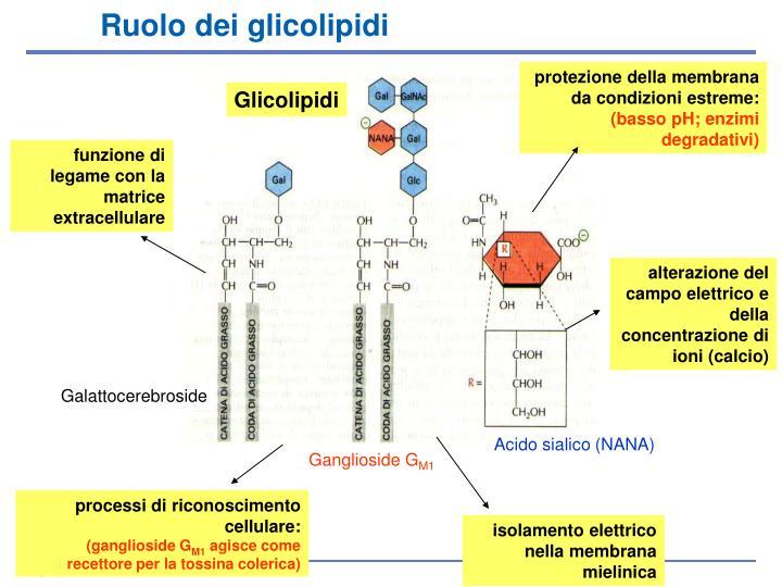 protezione della membrana