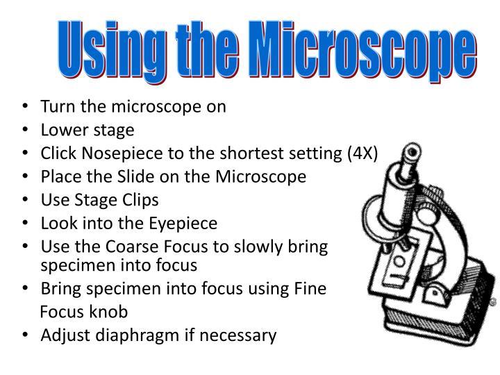Using the Microscope