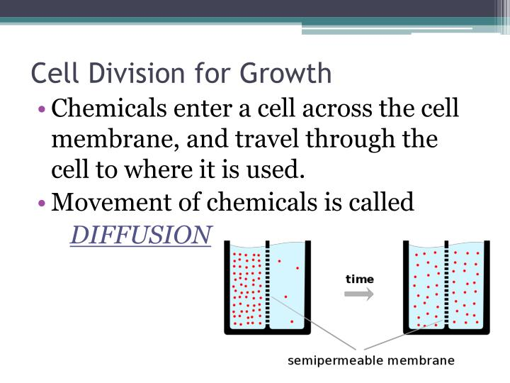 Cell Division for Growth