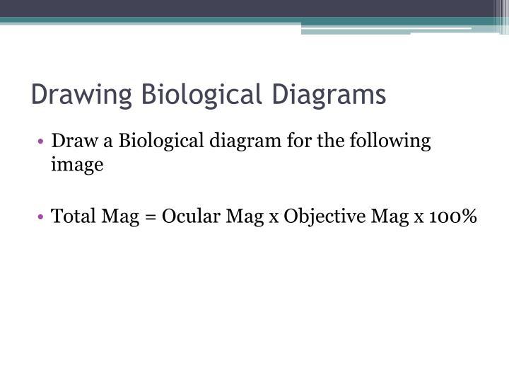 Drawing Biological Diagrams