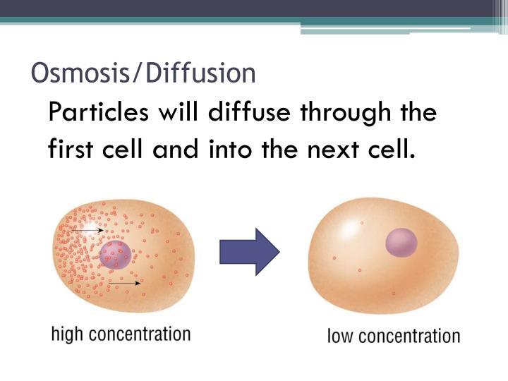 Osmosis/Diffusion