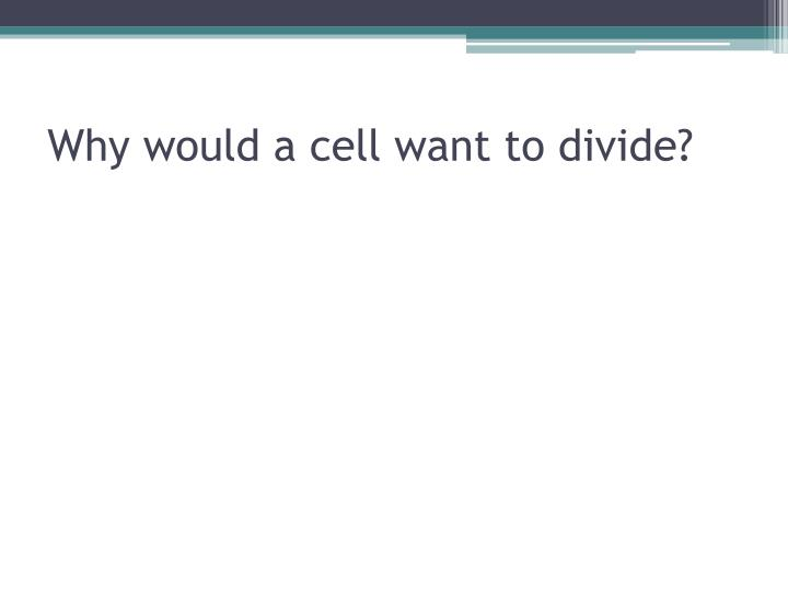 Why would a cell want to divide?