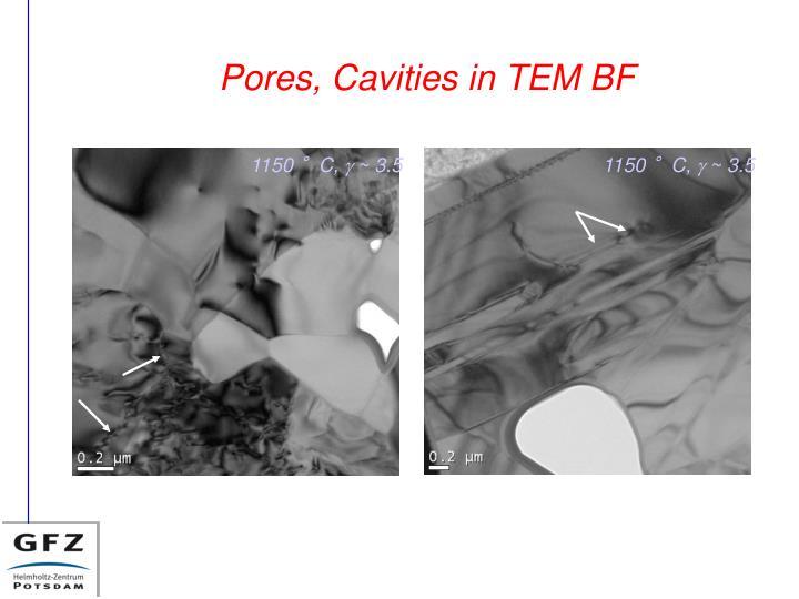 Pores, Cavities in TEM BF