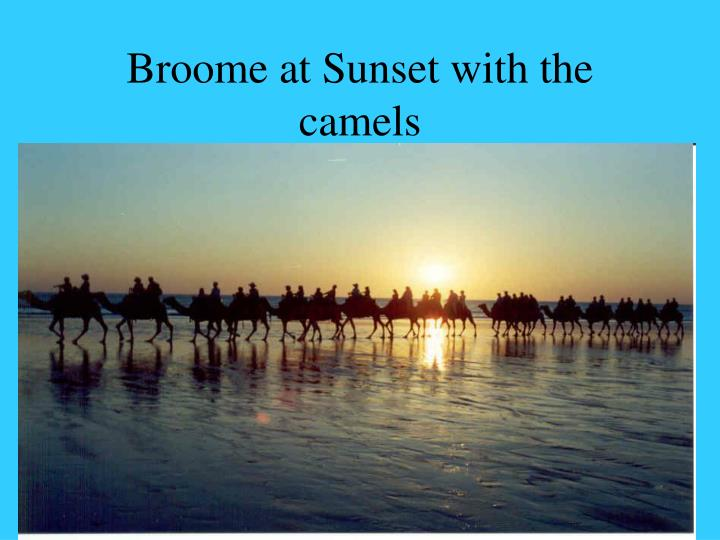 Broome at Sunset with the camels